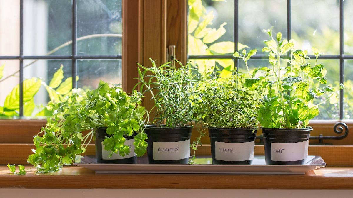 How To Grow A Home Herb Garden Gardening Guide For Growing Herbs