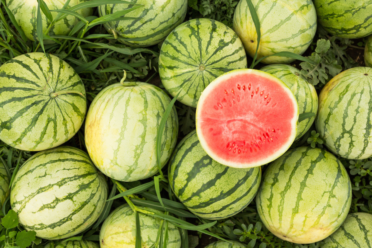 How To Grow Watermelon In Your Home Garden 2020 Masterclass