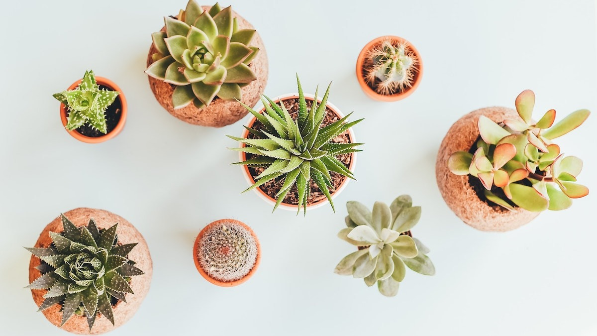 5 Ways To Keep Succulents Alive How To Care For Succulents 2021 Masterclass