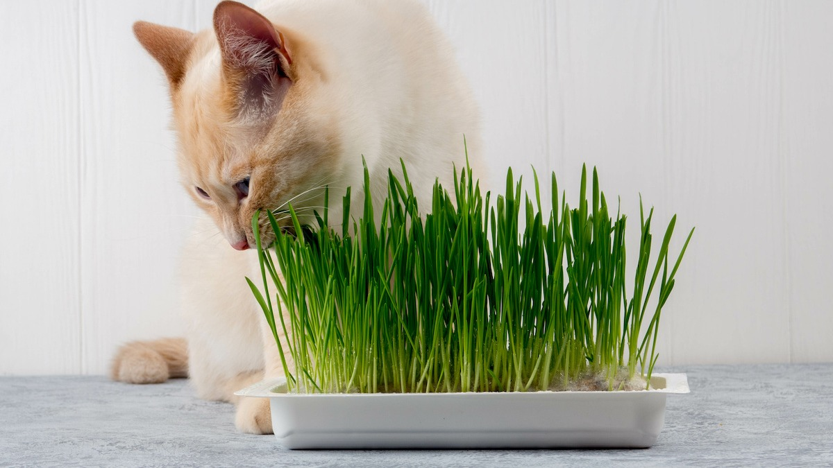 AdobeStock 277108259 - How To Get Rid Of Mold On Cat Grass