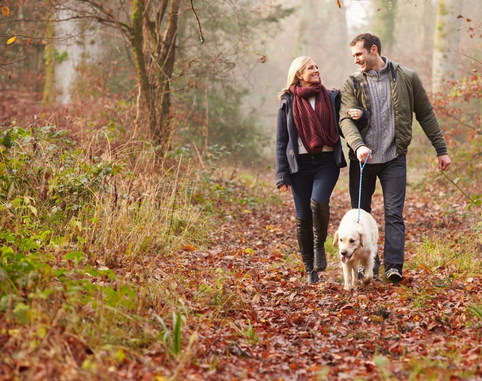couple-walking-their-dog-in-autumn-i-screen