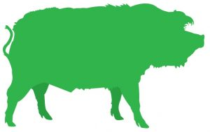 Green graphic of a hog