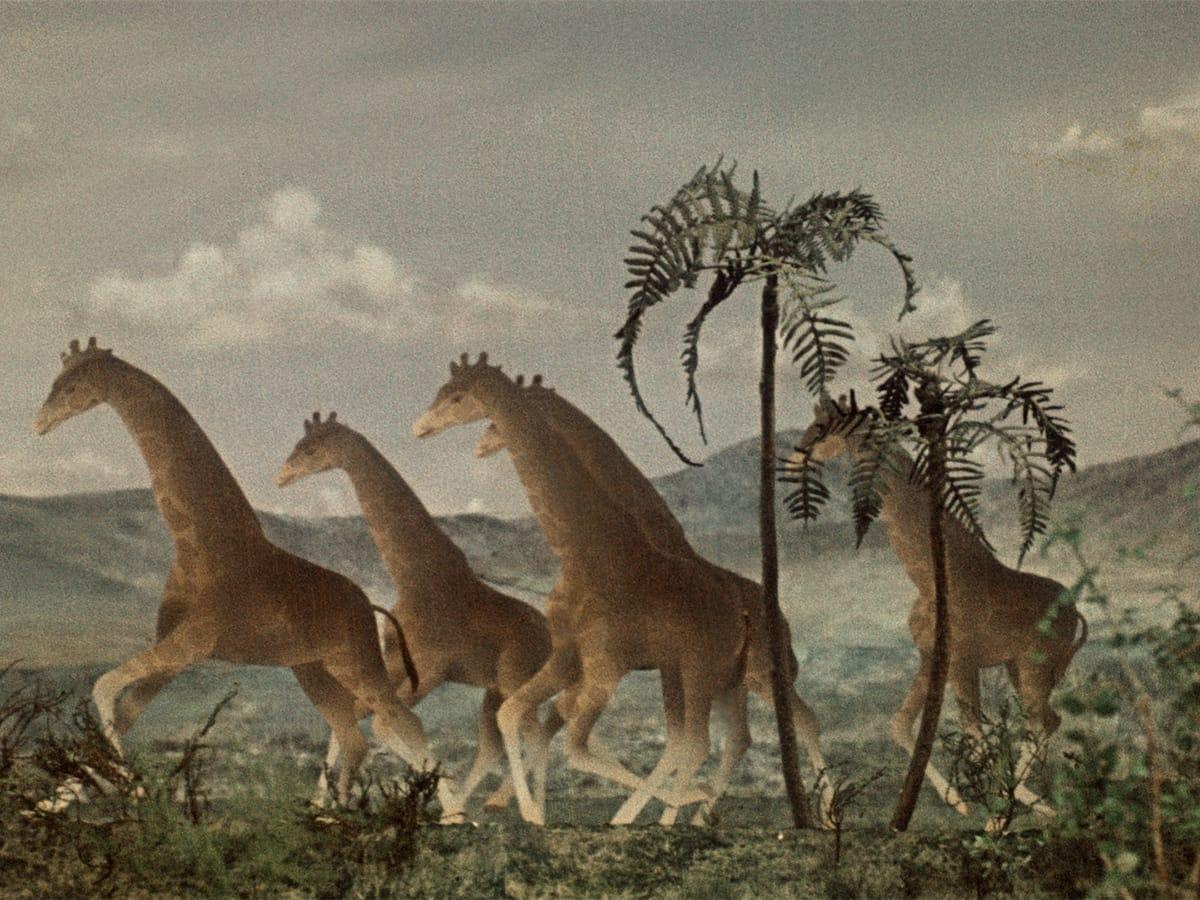 Dinosauri lunghi