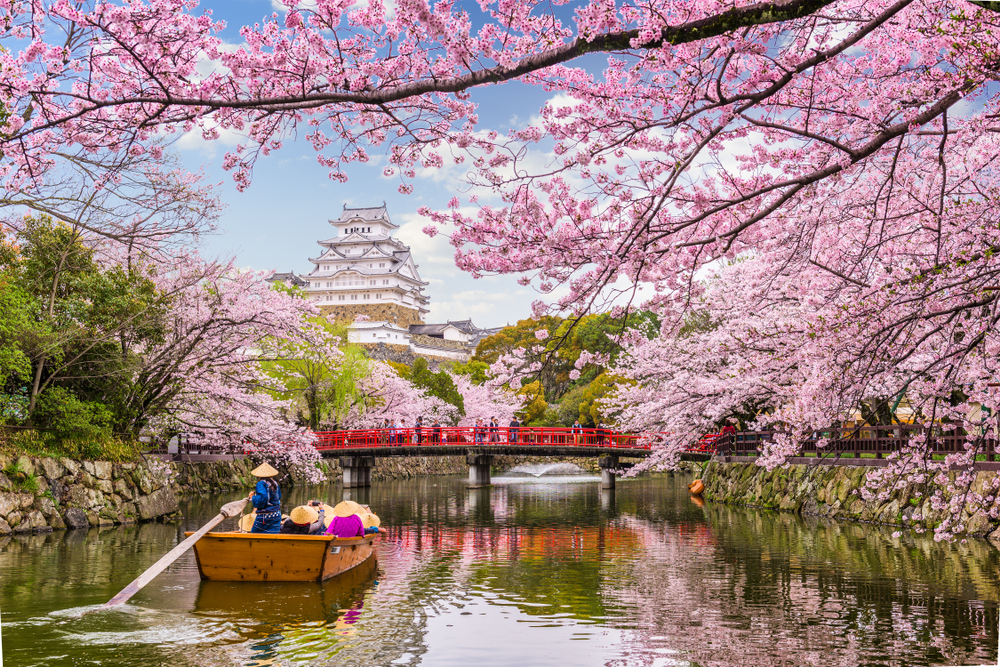 Japan Reached The Earliest Peak Of Cherry Blossoms In 1200 Is It Because Of Climate Change Jioforme