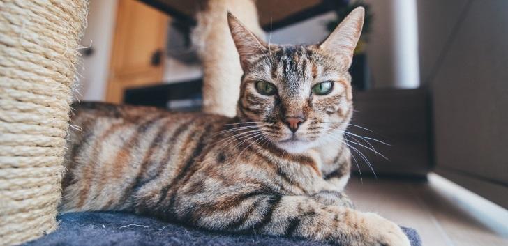 Blog | Safe Cat Safe Wildlife