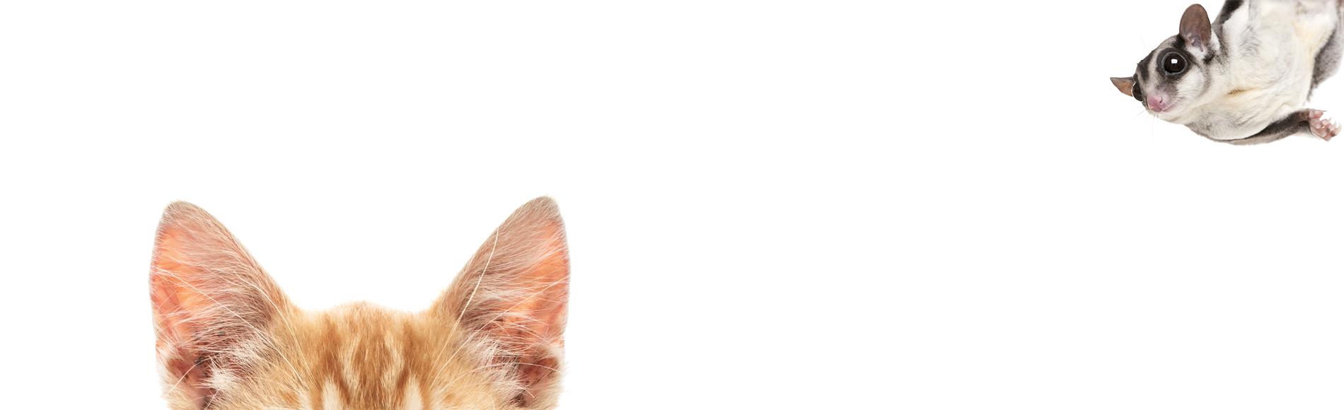 Expert Advice Safe Cat Safe Wildlife