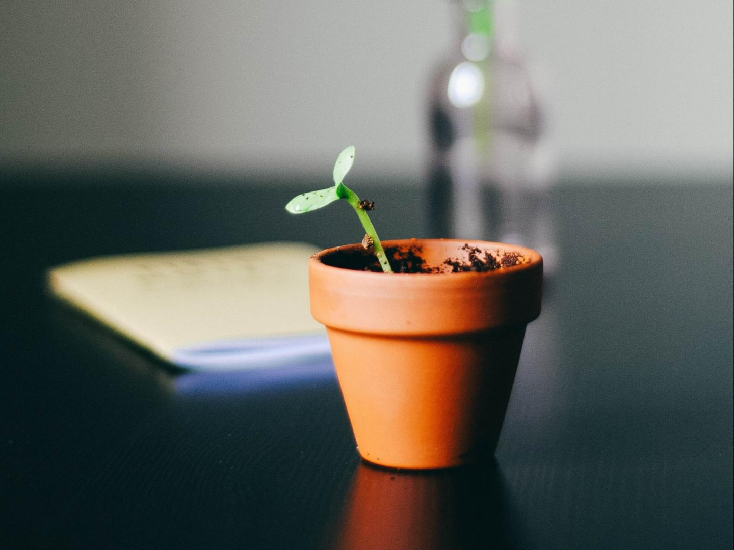 image of a potted plant beginning to sprout