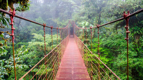 7 Epic Jungles Around the World and Their Wildlife