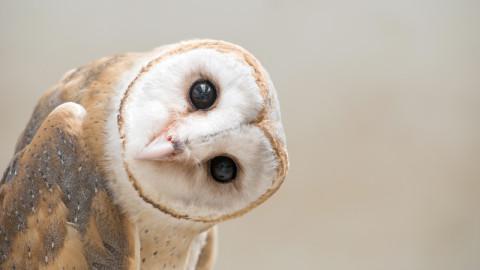 Trending animals/wildlife image 8
