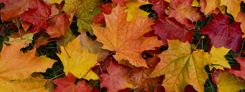 Autumn - Subcategory Page - Hero