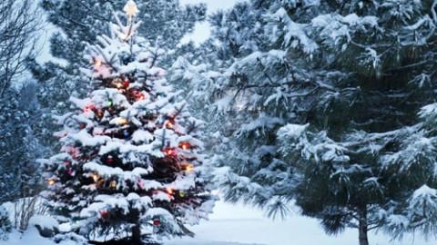 6d2e367c6d6beb41d9fa79fe558ee13d2219c9a7-holidays winter-holidays-min