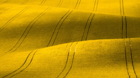Yellow-Thumbnail