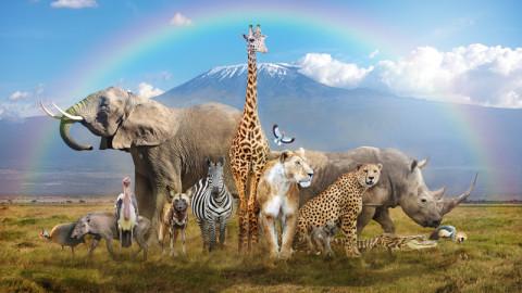 trending animals/wildlife 4