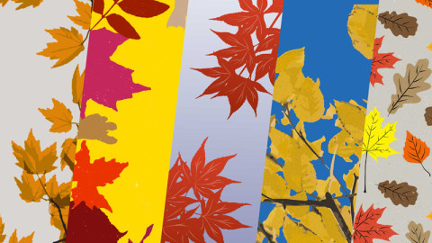 Free Fall Foliage Vectors and Overlays