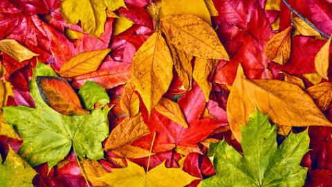 Trending autumn image 2