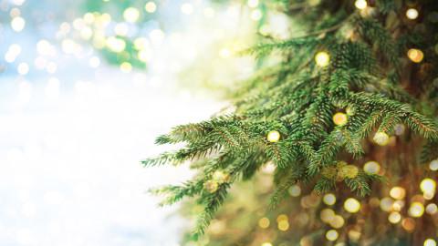 Christmas Trending Image 5