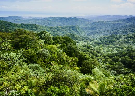 Regenwald El Yunque, Luquillo