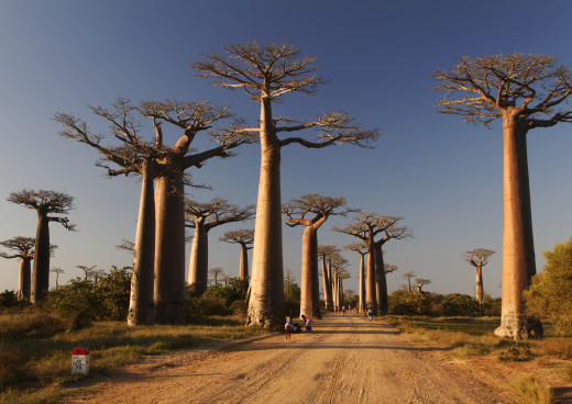 Allee der Baobabs, Mrondava