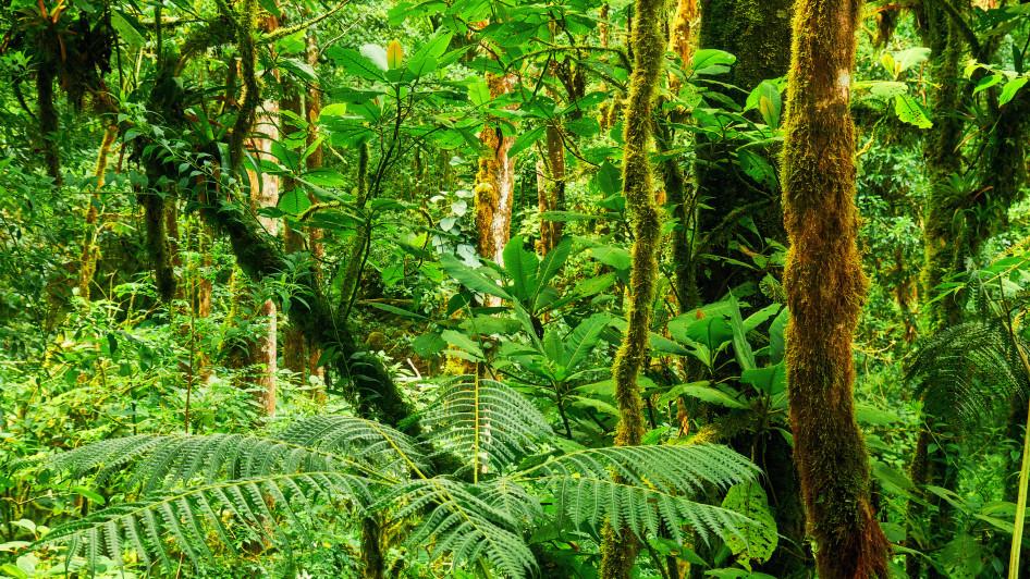Tropischer Regenwald, Panama