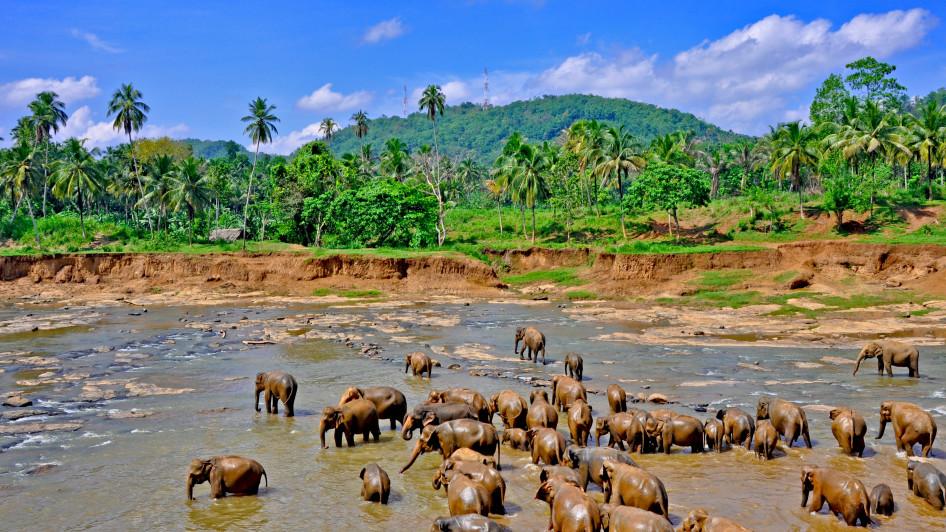 Elefantenwaisenhaus, Pinnawala, Landesinnere