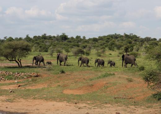 Krüger Nationalpark, Phalaborwa