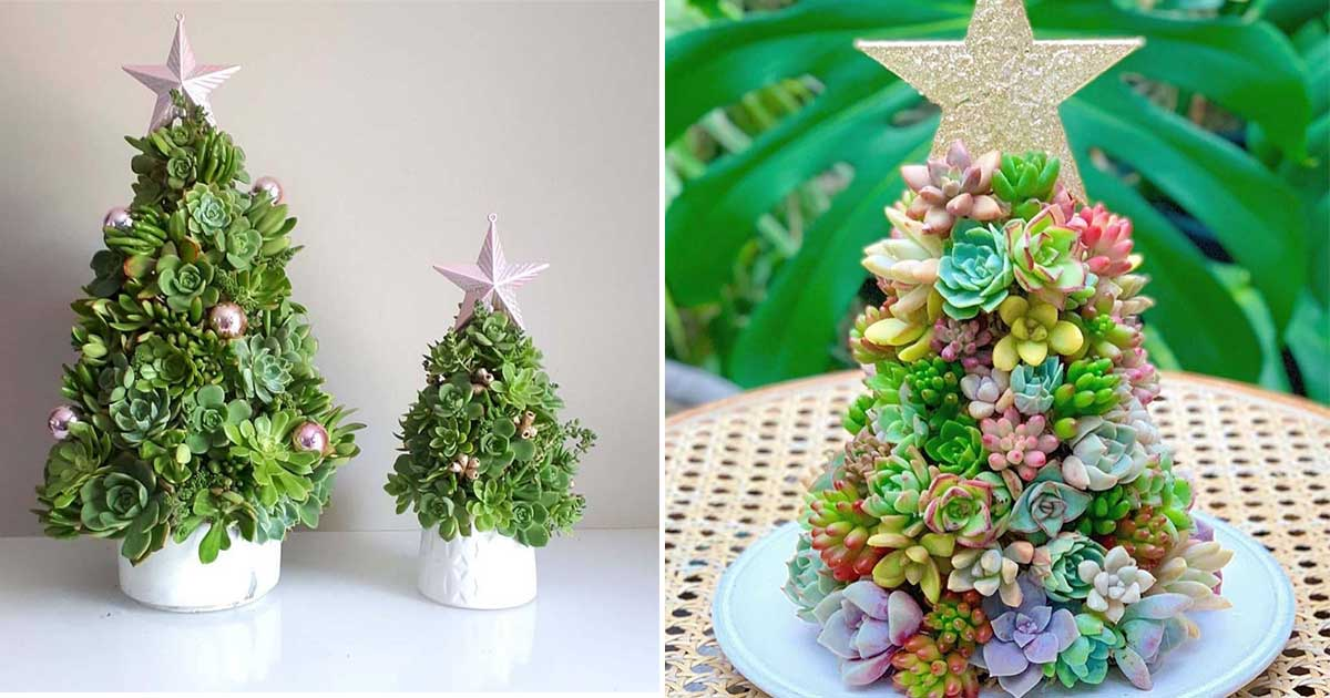 People Are Making Mini Christmas Trees Out Of Succulent Plants Totum