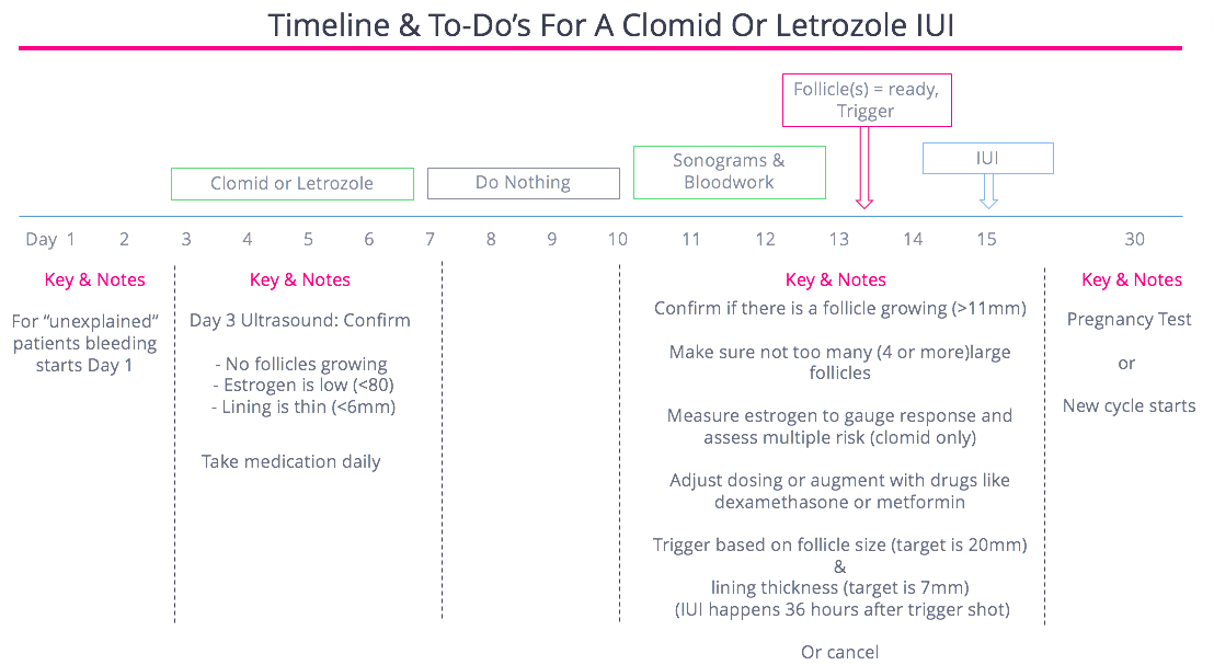 Timeline for Clomid Cycle