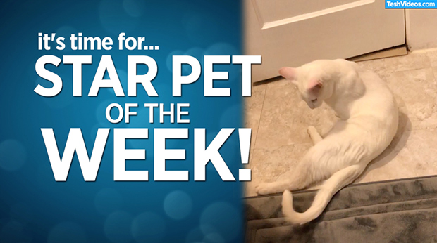 Star Pet Of The Week – August 30, 2019