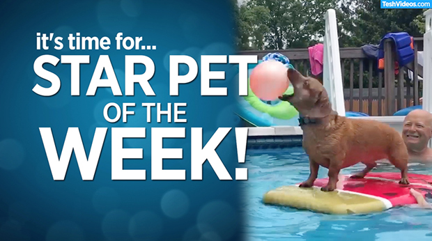 Star Pet Of The Week – June 14, 2019