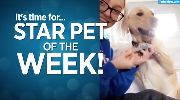 Star Pet Of The Week – October 4, 2019
