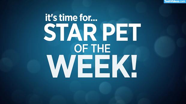 Star Pet Of The Week – September 7, 2018