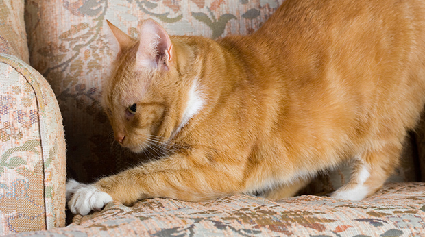 Why Does Your Cat Destroy Your Furniture?