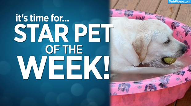 Star Pet Of The Week – November 1, 2019