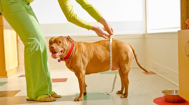 Fat Pets Have Shorter Lives