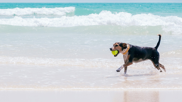 Why Dogs Love Water…