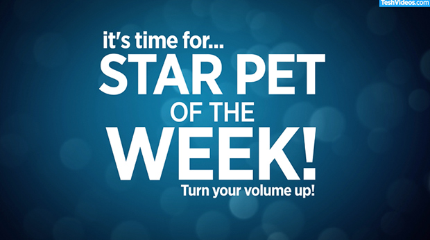 Star Pet Of The Week – August 8, 2018