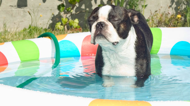 Keep Your Dog Cool In Hot Weather