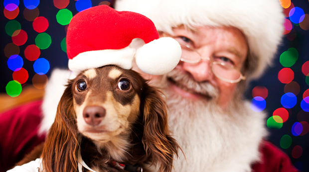 Hot Trend: Pet Pictures With Santa!