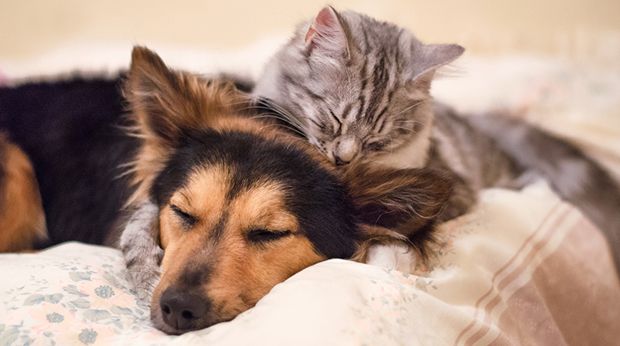 Dog & Cat Personality Differences