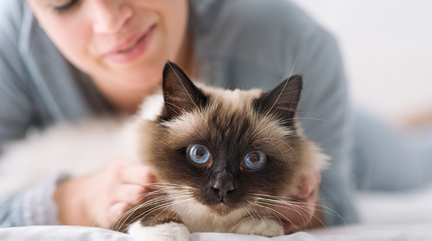 Don't Treat Your Cat Like A Dog!