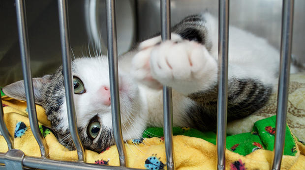 How To Help Shelter Animals
