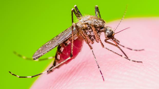 Why Do Mosquitos Love You?