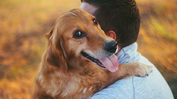 Your Dog Can Read Your Emotions