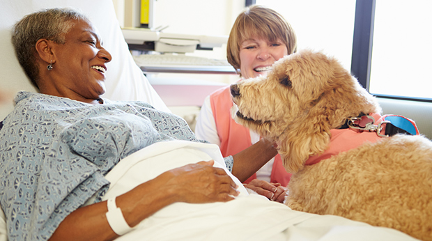 Do Therapy Dogs ENJOY Helping People?