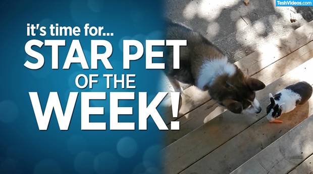 Star Pet Of The Week – November 22, 2019