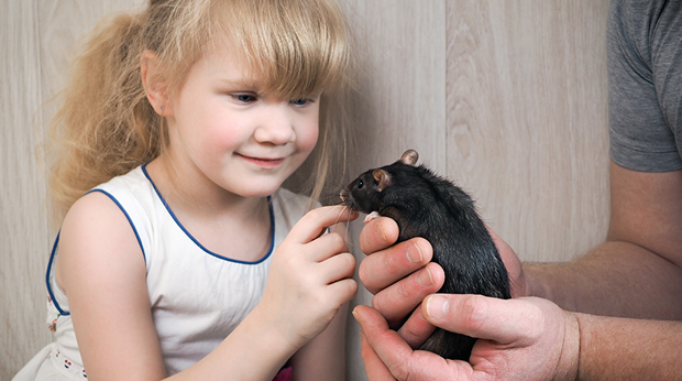 Getting Your Kid A Pet? How 'Bout A Rat!