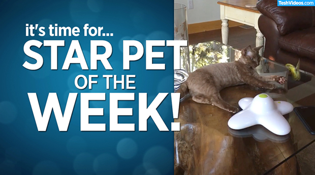 Star Pet Of The Week – August 9, 2019