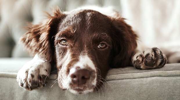 Dogs Get Empty Nest Syndrome, Too!