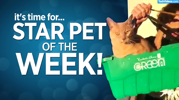 Star Pet Of The Week – May 3, 2019