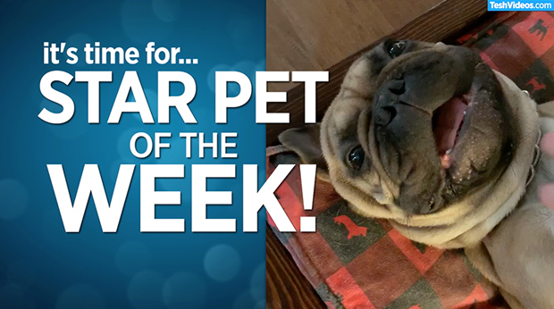 Star Pet Of The Week – July 19, 2019